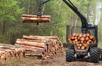 Деревообрабатывающая отрасль